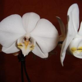 Moje kwiaty&#x3B;)