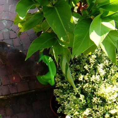 Pełna zapachów i kolorów. Owoce, zioła i warzywa wszelakie to teraz codzienny widok w kuchni. Kto robi przetwory pewnie ma tak samo. Na stole stoją słoje z orzechami na nalewkę i sezonowy wypiek - jagodzianki. Letnie popołudnia na tarasie kuszą, ale czas ucieka. Ogórki czekają. Zapraszam do kuchni. Tradycyjnej, swojskiej, może dziś trochę niemodnej ale ulubionej.