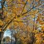 Ogród, Już listopad ............. - ...............i jesienny spacer..........