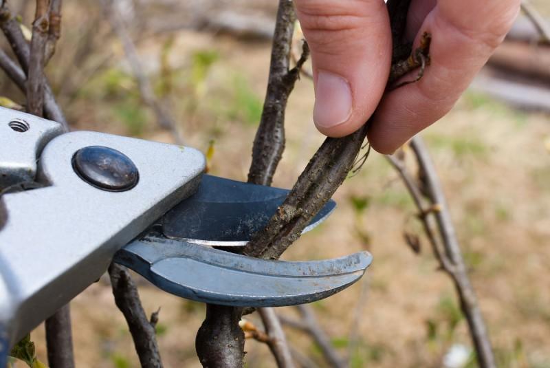Kalendarz cięcia drzew i krzewów ozdobnych