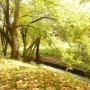 Rośliny, Złoto jesieni i moje zielone bombki..... - ..............nad rzeczką................