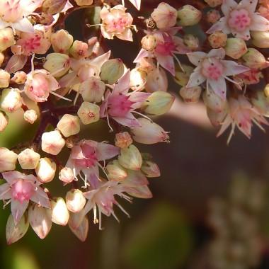Dzisiejsza galeria to taki mix kwiatowo-koronkowy.Kilka fotek z wyjazdu do Żywca ,Koniakowa i Istebnej.Obecnie trwają Dni Koronki Koniakowskiej.Szczególnie urzekły mnie koronczarki siedzące na ławeczce przy drodze,heklujące misterne koronki(heklować znaczy szydełkować i sama byłam zdziwiona bo myślałam,że słowo jest używane tylko w gwarze śląskiej a okazuje się,że w innych regionach kraju także...)Przywiozłam stamtąd kilka serwetek i obrusy  :)Jednak najpiękniejsze i najbardziej zachwycające dla moich oczu są krajobrazy Beskidu ŻywieckiegoZapraszam :)