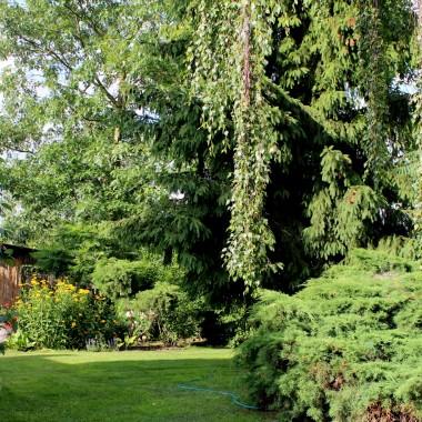 Mój ogród ma już kilkanaście lat.
