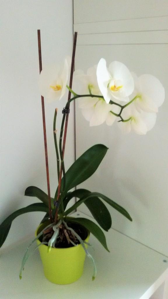 Rośliny, Rośliny doniczkowe