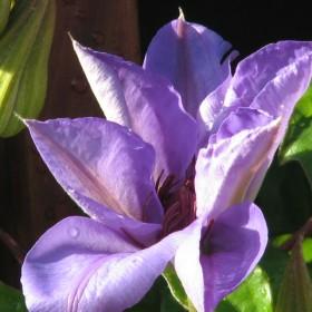 9&#x3B;30 rano z kwiatami