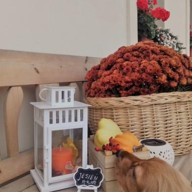 Ławeczka witająca gości w październikowej  odsłonie&#x3B;)A drzewko posadzone na wiosne-sumac octowiec, o którym zawsze marzyłam, przybrał cudowne kolory&#x3B;)Mam na niego widok z okna kuchni i cieszy moje oczy jak nie wiem co&#x3B;)