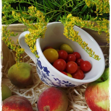 Po upalnym i suchym  lecie , zrobiło się jakoś jesienniej w przyrodzie i tylko ogrodowe astry przypominają mi , że lato jeszcze trwa . W przydomowym warzywniku cukinia ma się dobrze tylko czy zdąży jej kwiecie  przeobrazić się w dorodne cukinie ( cały sezon cukinii miałam pod dostatkiem ), a i pomidorki koktailowe mają się doskonale i są najsmaczniejsze na świecie &#x3B; a skoro wrzesień to i wrzosy się pojawiły i cebulki tulipanów ,hiacyntów  , bo to ich czas&#x3B;&#x3B;&#x3B;
