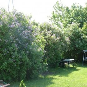 Ogród majowo - czerwcowy...
