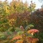 Pozostałe, Październikowe love........... - ...............i kolorowe liście...................