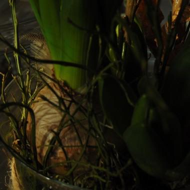 ...............i zielony ogródek...............