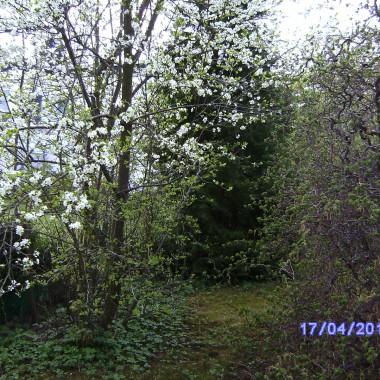 kolory wiosny w moim ogrodzie