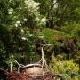 Ogród, Bez, bzy - przy altance