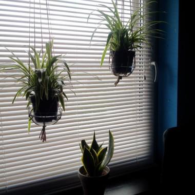 U syna w pokoju musi byc minimalizm, ale kwiaty, które oczyszczają powietrze to priorytet. Mam w planach dostawić więcej najlepiej oczyszczające Sansewiery