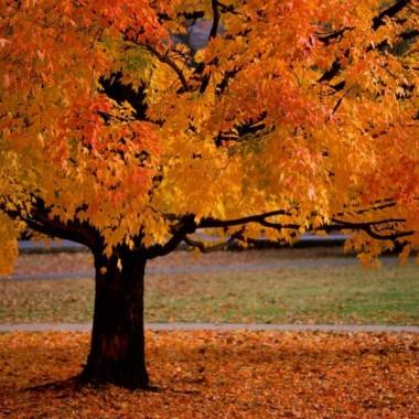 Żółty jesienny liść...