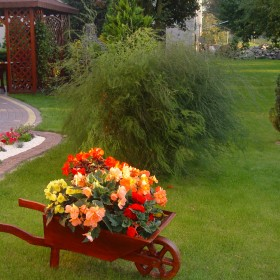 Mój ogród u schyłku lata