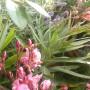 Balkon, Wrześniowe, wciąż  letnie fotki.................... - ...................i oleander..................