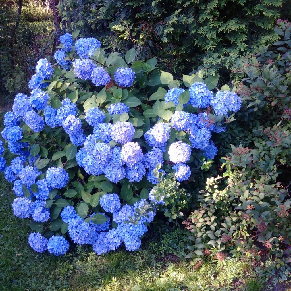 Ogród, Uchwycone w ogrodzie