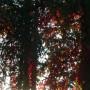 Pozostałe, Galeria jesienna.................październikowa............. - .............i czerwone wino .............