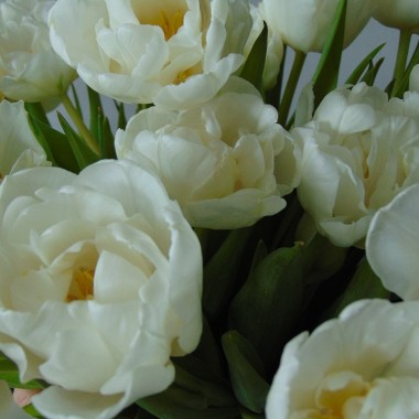 ................i tulipany.........