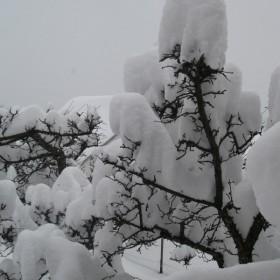 Zima w ogrodzie moich rodziców