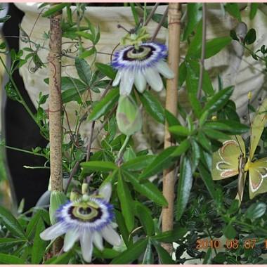 Moje kwiatki tarasowe