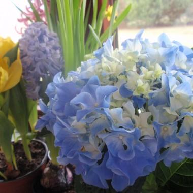 Parapetowo kwiatowe wariacje