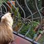 Ogród, Marcowe ogrody