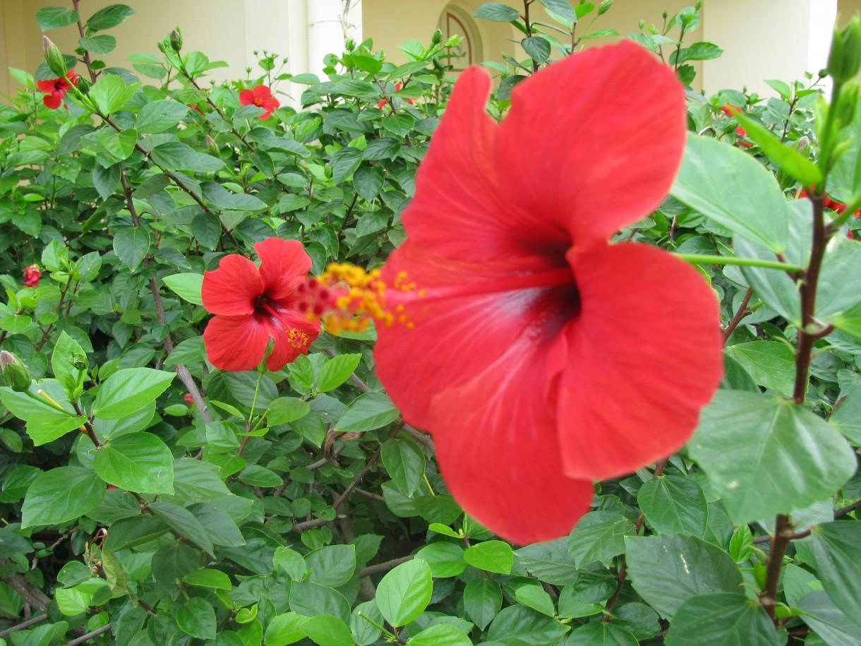 Roślinność i Ogród