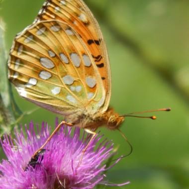 Ulotne jak motyle...szczęśliwe chwile