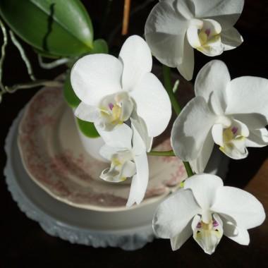 """Do Świąt już nie wiele czasu zostało ale na szybką metamorfozę zawsze się znajdzie chwila :) Czasami wystarczy jeden mebel, kilka dodatków, świeże kwiaty i gotowe! Specjalnie na tą okazję przygotowaliśmy dla Was atrakcyjne, """"przedświąteczne"""" ceny, zapraszamy :)http://retrobaza.wix.com/retrobaza"""