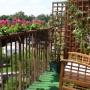 Rośliny, Mój balkonik