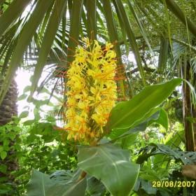 Egzotyczne kwiaty w ogrodzie botanicznym w Blanes