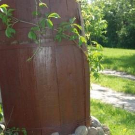 z ogrodu