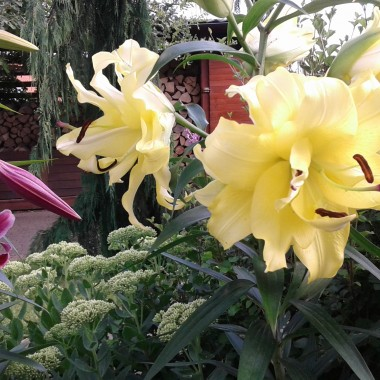 lekkie powietrze na Pomorzu + delikatny zapach kwiatów = :)