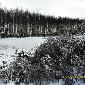 Zimowa odsłona mojego otoczenia