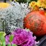 Rośliny, Jesienne kwiaty na balkon - Jest bardzo łatwa w uprawie. Najlepiej wybarwia się na słońcu. Nie lubi zbyt intensywnego podlewania ale nie może przeschnąć.  Fot.123RF.com