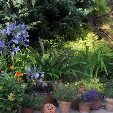 przez miesiąc kwiaty się rozrosły i zakwitły i nawet przekwitły:)
