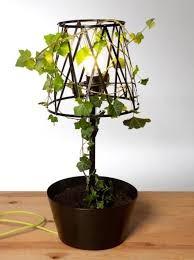 Pozostałe, Rośliny w domu - .............