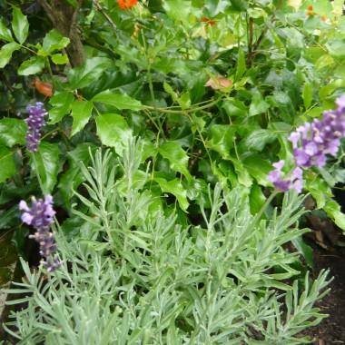 Wakacyjne migawki z ogródka
