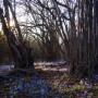 Leśne klimaty, Odkrycie