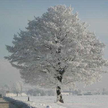 Zimowa, piękna niedziela w ogrodzie &#x3B;))