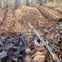 Leśne klimaty, Marcowa słoneczna niedziela w lesie