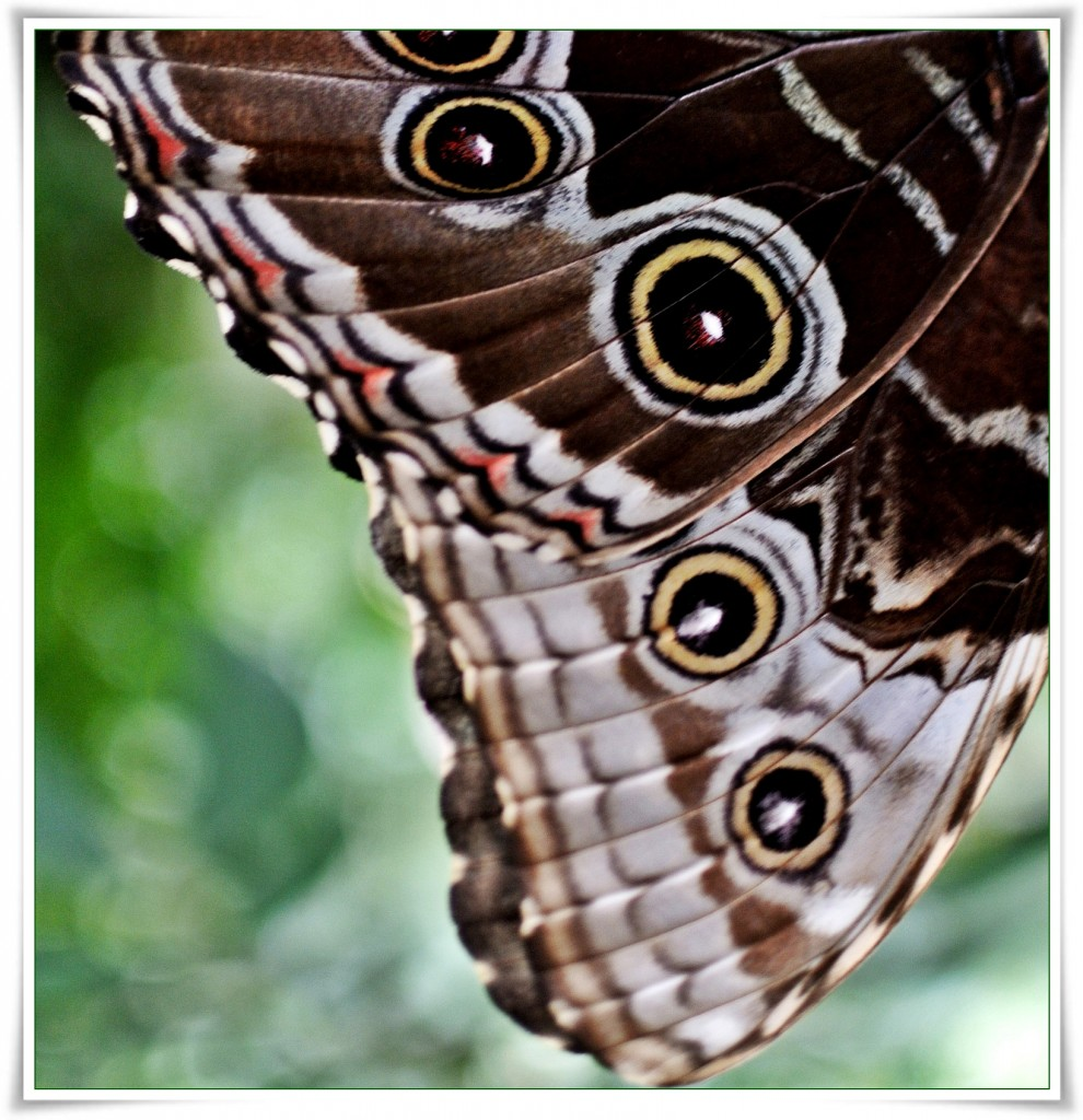 Łapanie motyli..