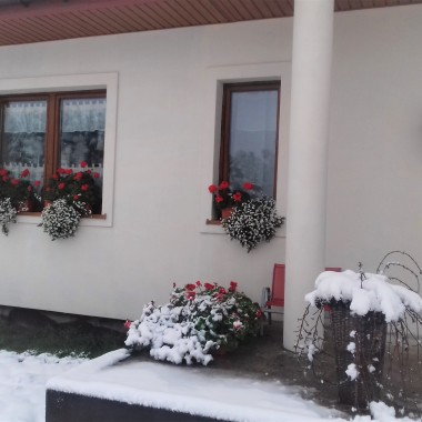 moje kwiaty to prawdziwe herosy, zima im nie straszna&#x3B;)krajobraz wokół zrobił się bajkowy&#x3B;)))A kwiaty do sniegu pasuja jak wół do karety, ale szkoda mi je zdjąć i pościnać, czekam aż trochę podmarzną i wtedy poobcinam i przechowam&#x3B;)A dzis mijają dwa lata odkąd mieszkamy&#x3B;) 1 grudnia 2015 to był najpiękniejszy poranek, gdy za oknem zobaczylam sosny, a nie szare mury kamienic:)