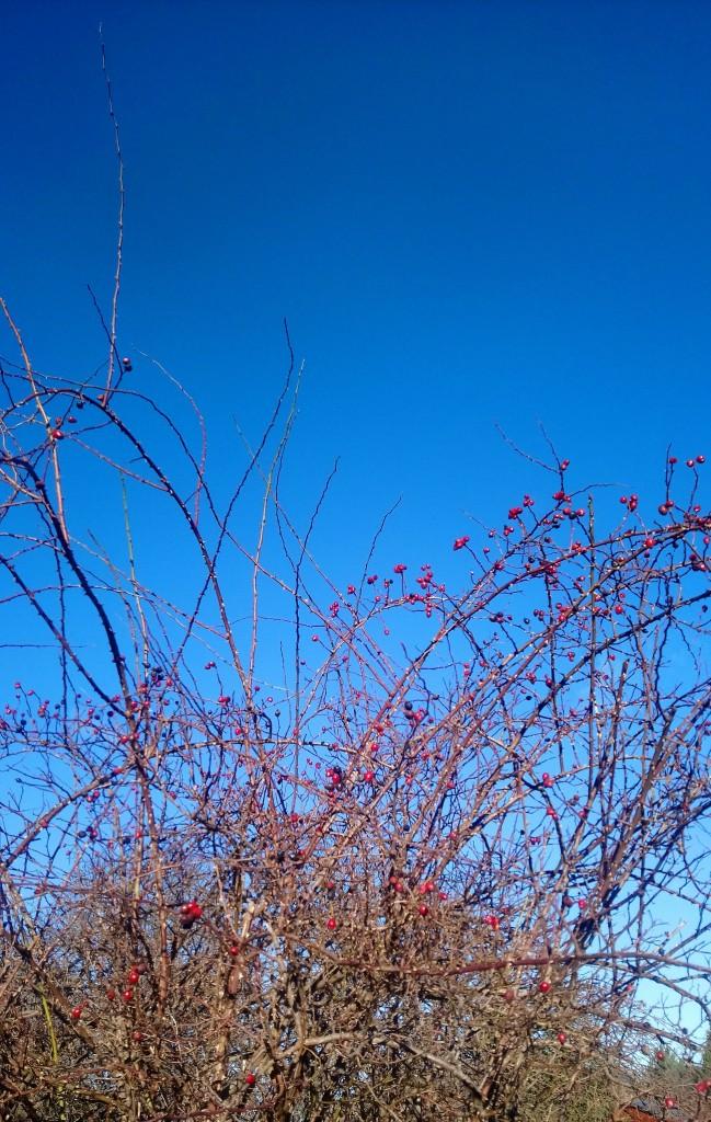 Dekoratorzy, Czekając na wiosnę .................. - ...................i dzika róża....................