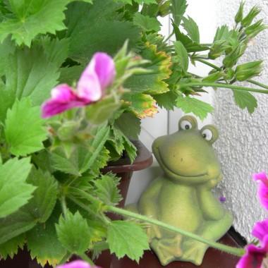 trochę żab też mam &#x3B;)