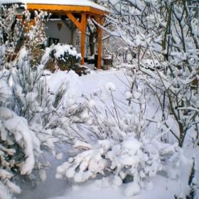 Ogródek w zimie