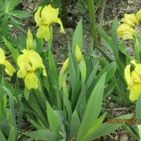 Wiosna w Dzikim Ogrodzie-cd