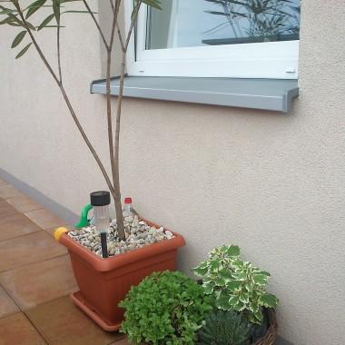 nowe roślinki