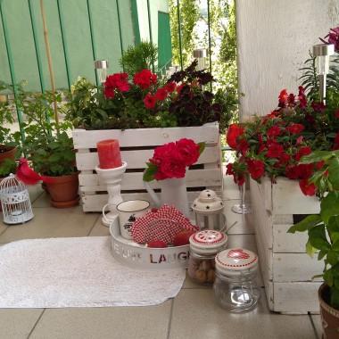 Dziś za oknem zrobiło się biało, a ja tęsknię już za wiosną...latem...zielenią...kwiatami... w wolnych chwilach wracam do zdjęć balkonu z ubiegłego roku i obmyślam aranżacje na tegoroczne lato.W galerii zdjęcia balkonu sprzed remontu elewacji bloku, zielonego ogrodu i... kwiatków, które zakwitły w ogrodzie na początku stycznia :)